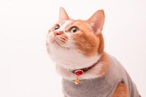 ぽぽねこの猫首輪