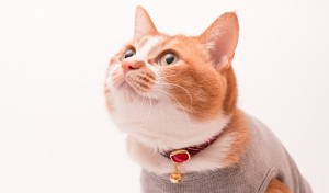 ぽぽねこ猫首輪