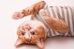 猫の暮らしに、もっと笑顔を。