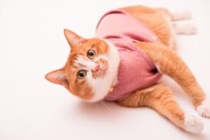 ぽぽねこの猫服