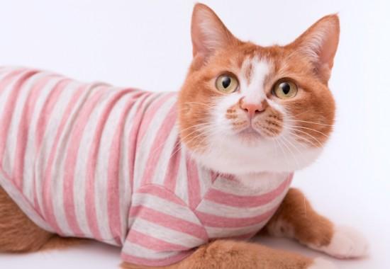 ぽぽねこが「猫服」を新発売 掻き壊し・舐め壊し防止、術後・怪我ケアに使える、猫ちゃんの皮膚・被毛への負担が少ない猫服