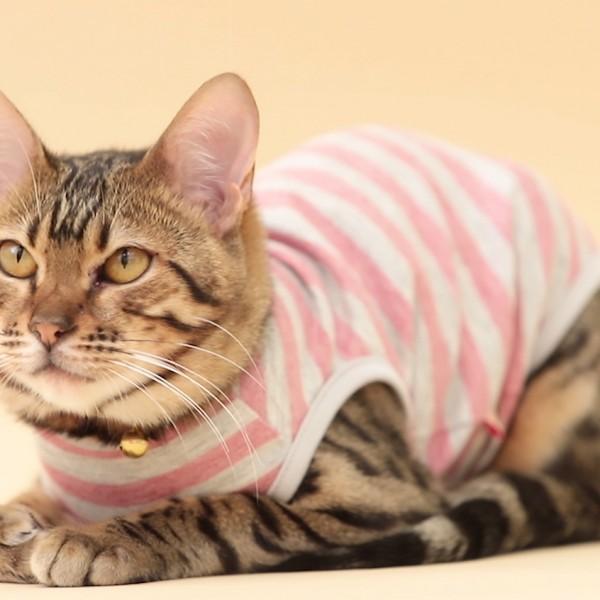 猫服CM動画