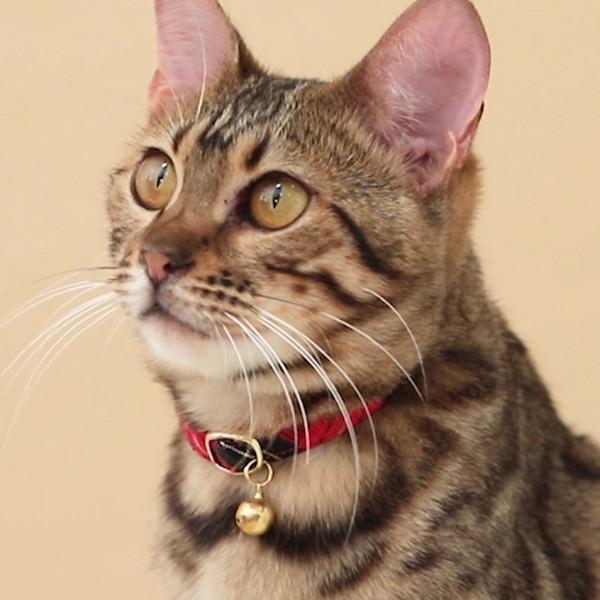 猫首輪CM動画