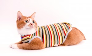 猫に優しい猫服 キャットウォーム