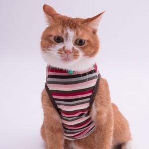猫に優しい猫服 キャットウォームタンク マルチボーダー