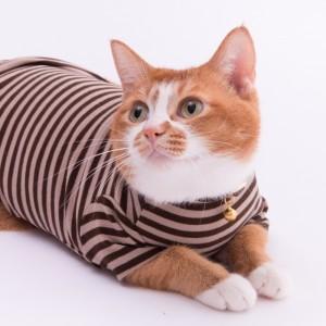 猫に優しい猫服 キャットウォーム Tシャツ ボーダー