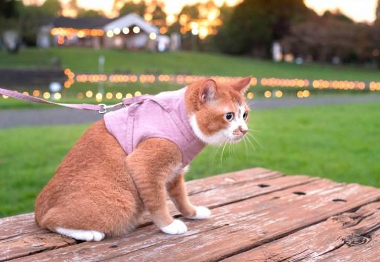 ペット防災の必需品! ぽぽねこ「猫に優しいベスト型ハーネス」販売再開