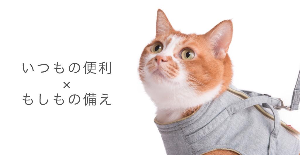 猫用ハーネスはペット防災の必需品
