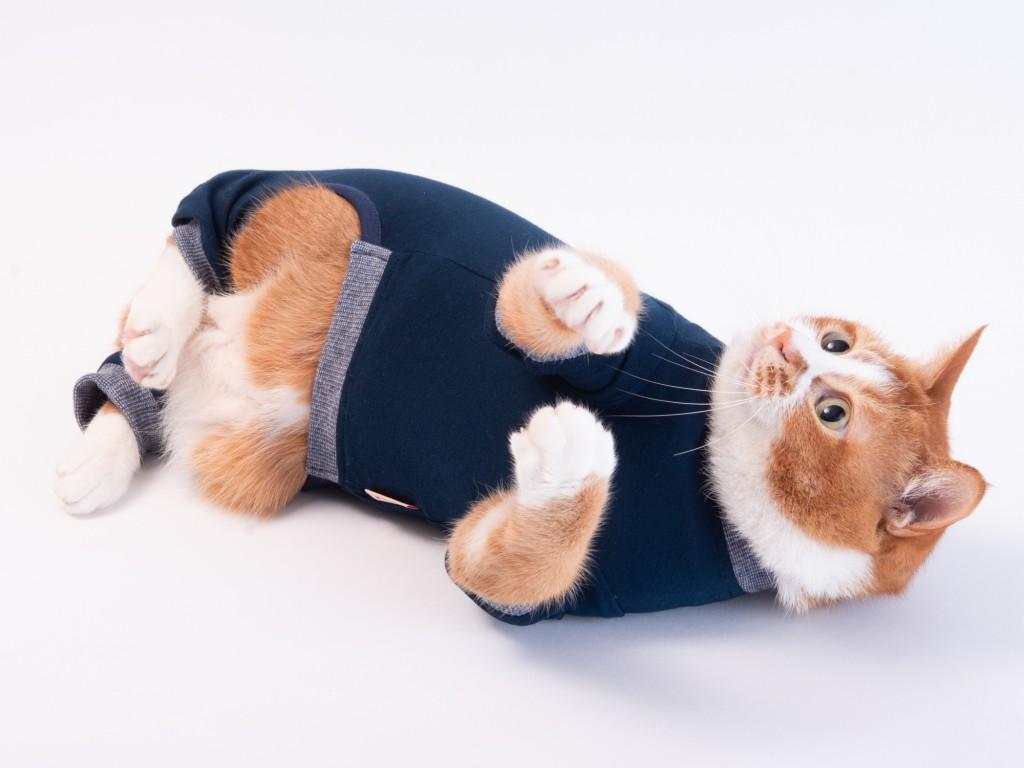 エリザベスカラーの代わりに猫服を
