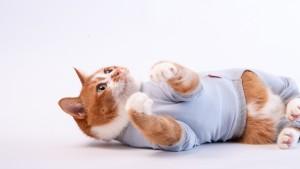 猫用皮膚保護服「キャットプロテクションスーツ」に新色登場